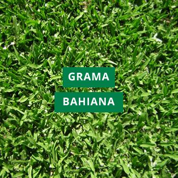 Grama Bahiana