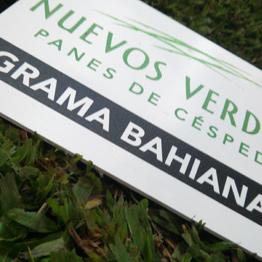 CESPED NUEVOS VERDES CONGRESO NACIONAL DE VIVERISTAS